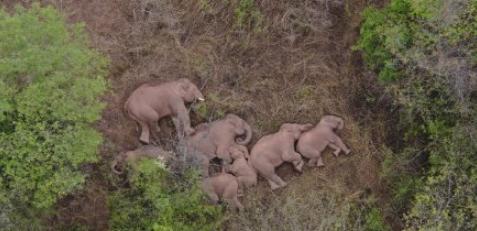 大象睡觉是站着睡还是躺着睡2