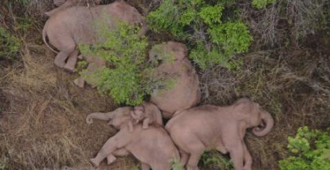 大象睡觉是站着睡还是躺着睡3