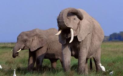 大象睡觉是站着睡还是躺着睡