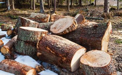 木头一般刷什么漆什么油