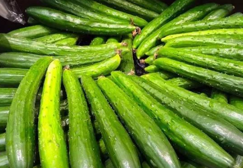 黄瓜养殖与温度有关系吗插图2