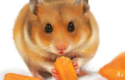 养仓鼠可以喂什么插图1