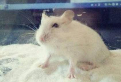 仓鼠用完的浴沙要扔吗2