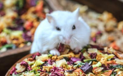 养仓鼠可以喂什么