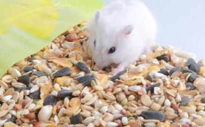 仓鼠吃自己的粑粑会生病吗