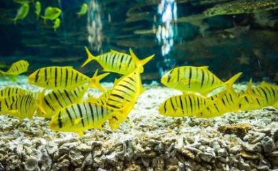 鱼缸水发白对鱼有影响吗
