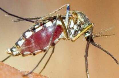 花蚊子咬了怎么消肿止痒最快插图2