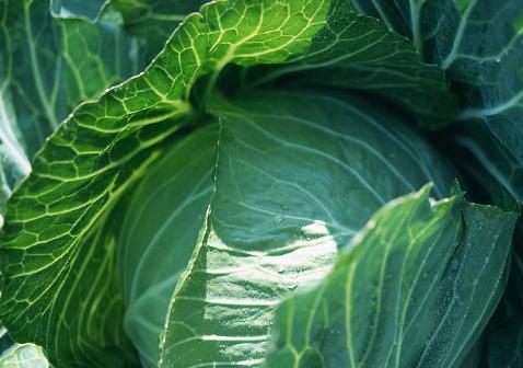 蔬菜发生早衰的原因是什么插图1