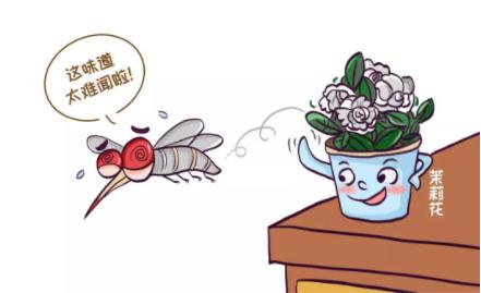 蚊子喜欢咬什么人插图