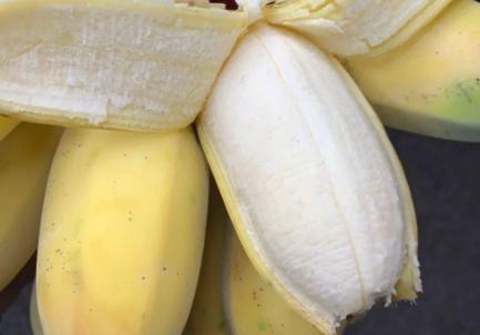 苹果蕉是芭蕉还是香蕉插图