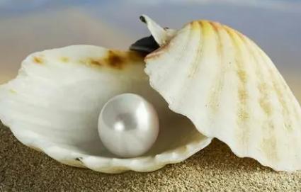 珍珠蚌没了珍珠会死吗插图1