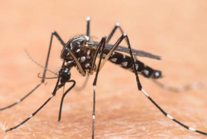 冬天蚊子都冻死了夏天蚊子怎么来的插图3