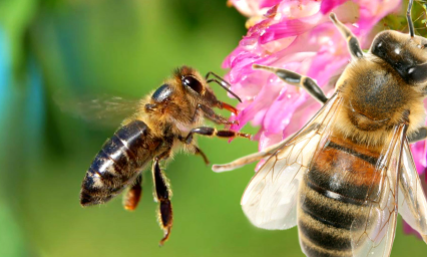 人们取了蜂蜜后蜜蜂还有得吃吗插图1
