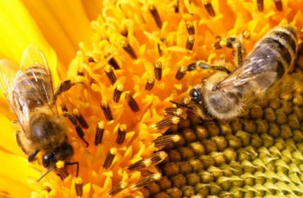 人们取了蜂蜜后蜜蜂还有得吃吗插图2