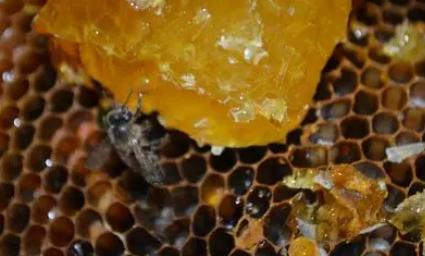 人们取了蜂蜜后蜜蜂还有得吃吗插图3