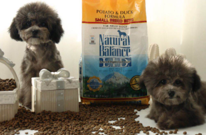 小型犬适合吃什么狗粮插图3