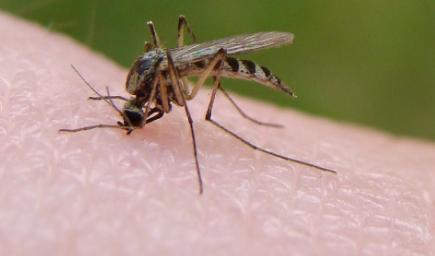 雨为什么砸不死蚊子插图