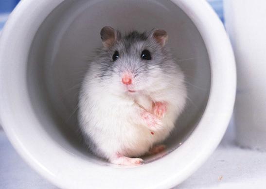 大学宿舍可以养仓鼠吗插图1