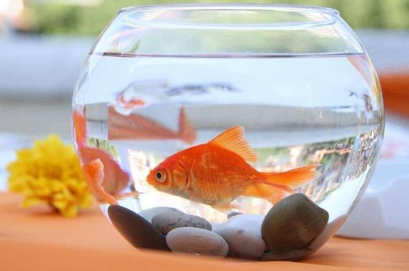 大学生宿舍可以养鱼吗插图2