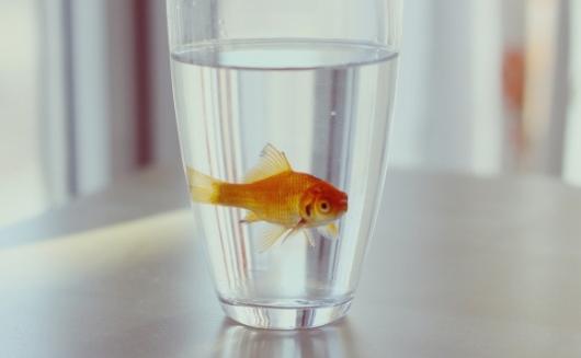 大学生宿舍可以养鱼吗插图
