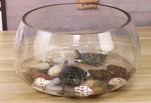 大学宿舍允许养乌龟吗插图1