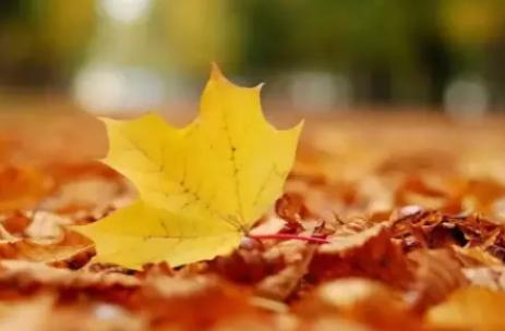 秋天的第一天是立秋还是秋分插图2