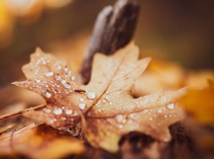 秋天的第一天是立秋还是秋分插图1