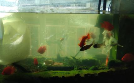 养鱼的水是什么颜色好插图1