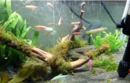 养鱼的水是什么颜色好插图3