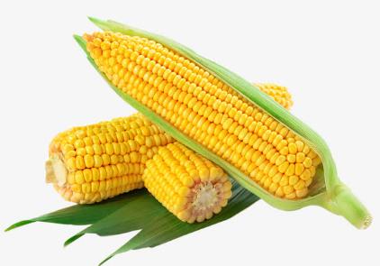 玉米粘虫为何防控效果不佳插图2