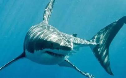 郑州海洋馆鲨鱼跑出来了2021真的假的