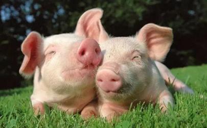 2021猪肉有病毒是真的吗