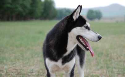 狗的口水有病毒吗