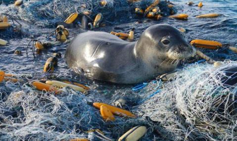 海洋上的垃圾害死了多少生物1