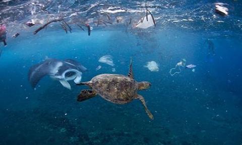 海洋上的垃圾害死了多少生物2