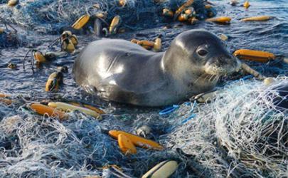 海洋上的垃圾害死了多少生物