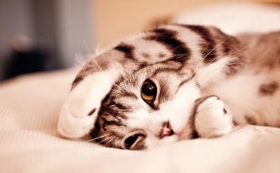 猫为什么喜欢拿尾巴扫人