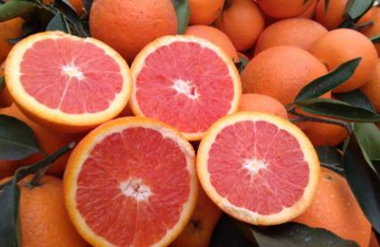 血橙几月份成熟上市插图2