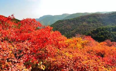 2021香山红叶在哪里看最美