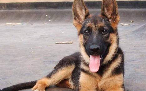 狗咬了多久过安全期是10年吗3