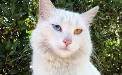 猫抓伤的死亡率为零是真的吗