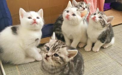 猫咪软便益生菌吃几天