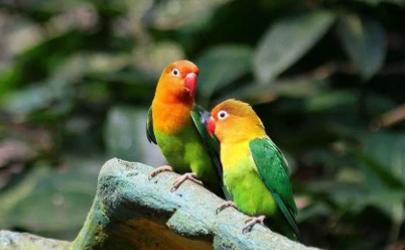 鹦鹉热是什么病毒