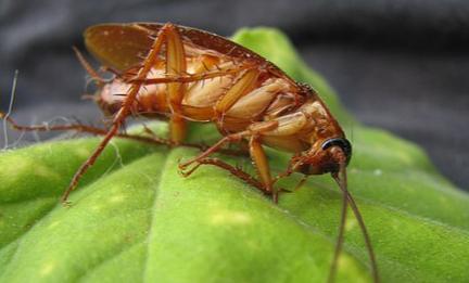 蟑螂药粉和胶饵哪个好用1