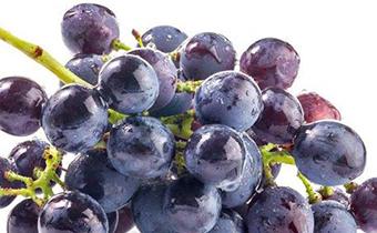 鲜枣和葡萄能一起吃吗 黑布林可以和葡萄一起吃吗