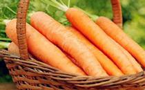 胡萝卜营养翻倍 孕妇吃胡萝卜的好处