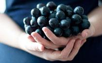 孕妇经常吃葡萄的好处是什么 怀孕能不能吃葡萄