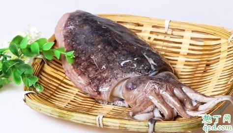 墨鱼能保鲜多久 老渔民教你挑健康墨鱼